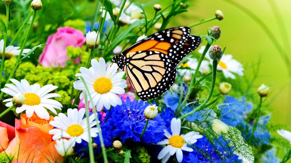 Primavera: i benefici della luce sul nostro corpo e sulla nostra psiche