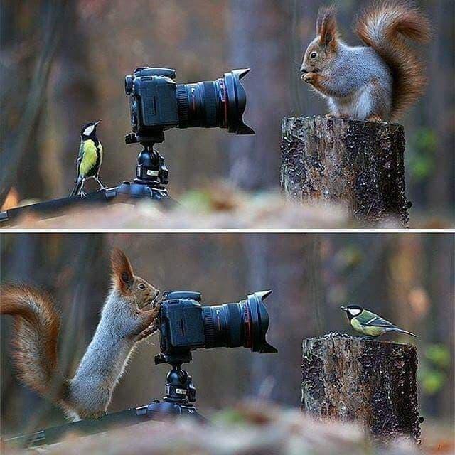 Anche gli animali amano fotografarsi ....