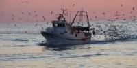 """09 Mar - 10:23:09 Manfredonia/ Arriva l'ok per la pesca del rossetto. Soddisfatta Federcopesca """"Con il via libera europeo"""